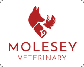 Molesey Veterinary